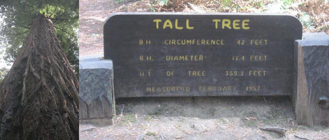 tall_01